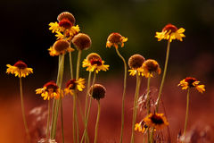 Desert Blossom Stock Image