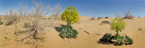 Desert booming Stock Image