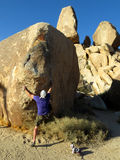 Desert Bouldering. A man bouldering on a rock in Joshua Tree, CA Royalty Free Stock Photo
