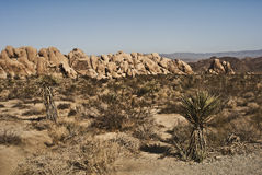 Desert Boulders. From Indian Canyon from Joshua Tree National Park in Indian Canyon stock images