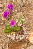 Desert Bouquet Stock Images