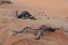 Desert branches Stock Image