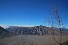 Desert Bromo. Line of green tree with green grass on Bromo mount Stock Photo