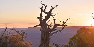 Desert Brush. In Utah silhouetted at Sunset with bright colors Stock Image