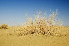 Desert Bush Royalty Free Stock Photography