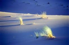 Desert bush. Dunes landscape, sahara, Algeria, Africa Stock Photo