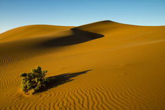 Desert Bush Stock Photos