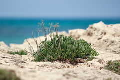 Desert bush royalty free stock image