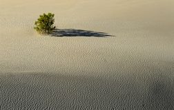 Desert bush on a sand dune Stock Image