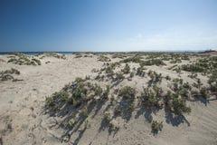 Desert bushes on coastal sand dune Royalty Free Stock Images