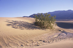 Desert bushes on sand dunes Stock Images