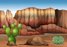 A desert with cacti Stock Photography