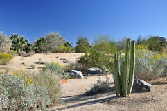 Free Desert Cactus Stock Photo - 29532040