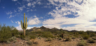 Desert Cactus And Mountains Landscape Stock Photo