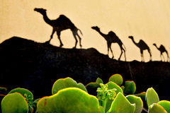 Desert Cactus and Camels Stock Photography