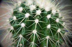 Free Desert Cactus Closeup Stock Photography - 74637882