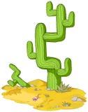 Desert Cactus Stock Images