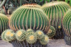 Desert cactus Stock Photo