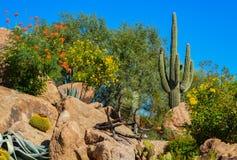 Desert cactus landscape in Arizona stock photos