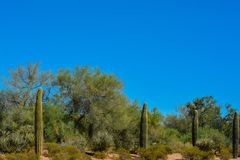 Desert cactus landscape in Arizona.  royalty free stock photography