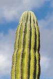 Desert cactus in mexico Stock Photos