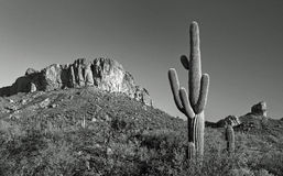 Desert cactus and mountain panorama Royalty Free Stock Image