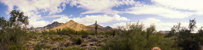 Desert cactus and mountains panorama stock images