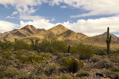 Desert cactus and mountains Stock Images