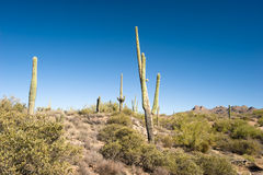 Desert cactus panorama Stock Photography