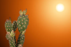 Desert. Cactus Plant with a Burning Desert Sun on the Background stock image