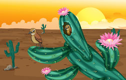 A desert with cactus plants and birds Royalty Free Stock Photo