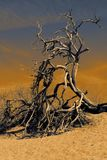 Lonely tree in the desert, Death Valley National Park royalty free stock photography