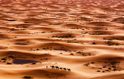Desert. Camel caravan going through the sand dunes in the Sahara Desert, Morocco royalty free stock photo