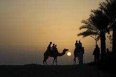 Desert camel and rider silhouette Royalty Free Stock Photo