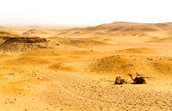 Desert and camels Stock Photo