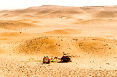 Desert and camels Stock Photos