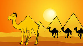 Desert Camels. A illustration of desert animal background Stock Image