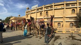 Desert Camels Stock Photo