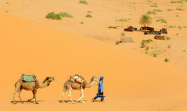 Desert Camp. The camel driver reaches the tent camp in the dunes of the Moroccan desert near the village of Merzouga Stock Photos