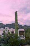 Desert campground motorhome RV Saguaro Cactus Royalty Free Stock Photography
