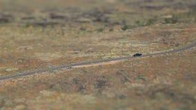 Desert Canyon Car Drive Tilt Shift stock video