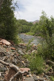 Desert canyon creek Stock Photography