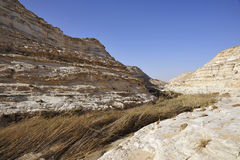 Desert Canyon after flood. Canebrake in Nahal Akev after spring flood in Negev desert, Israel Stock Photography