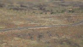 Desert Canyon Running Tilt Shift stock video