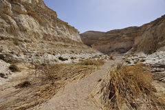 Desert Canyon trek after flood. Royalty Free Stock Image