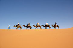 Desert caravan. Camel caravan in the Moroccan Sahara Stock Photography