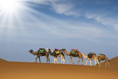 Desert caravan Royalty Free Stock Photos