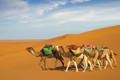 Desert caravan Royalty Free Stock Photography
