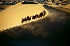 Desert caravans royalty free stock images