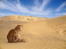 Desert with cat Stock Photo
